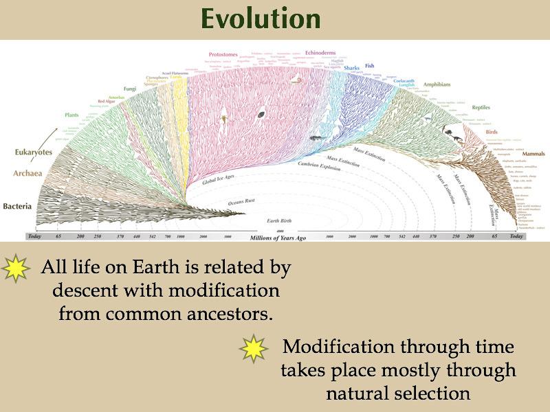 Best websites on evolution explained?