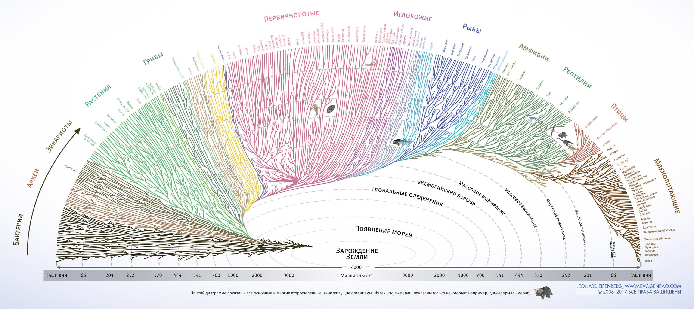 Быстрая экспериментальная эволюция: учёные показали процесс видообразования за 4 года